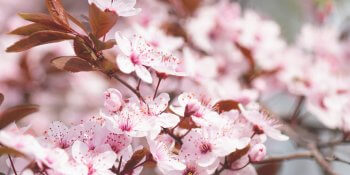 Как выучить японский язык: план действий