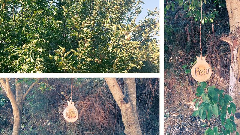 Лес на севере Израиля